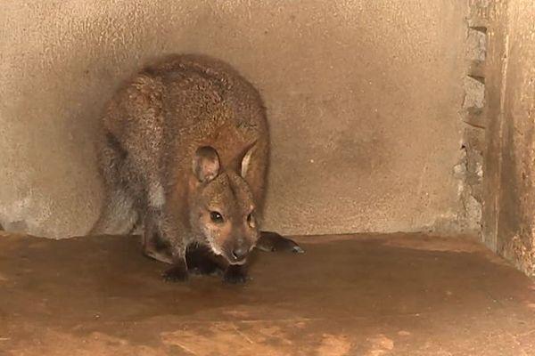 L'animal a été recueilli à la SPA de Chagny.