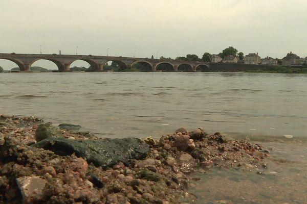 Cyanobactéries en Loire, à hauteur du Ponts-de-Cé, en Maine-et-Loire, août 2020