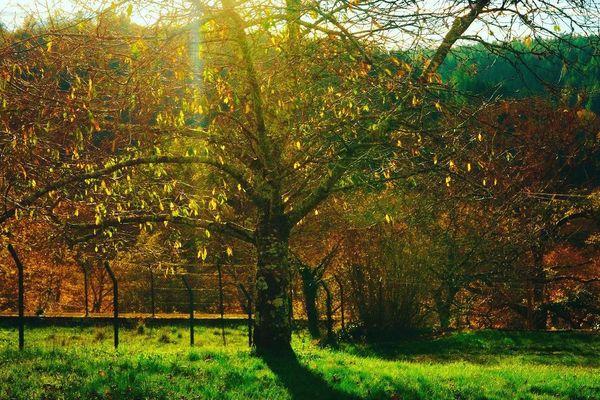 Les jolies couleurs de l'automne