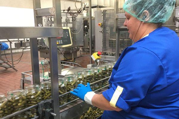Depuis cette année, les cornichons français sont conditionnés dans l'usine Reitzel de Bourré dans le Loir-et-Cher.