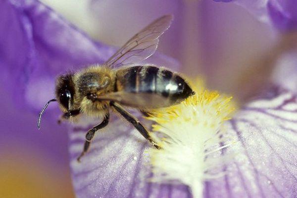 Les  pesticides néonicotinoïdes, ennemis des abeilles et plus généralement, de l'environnement et de la santé.