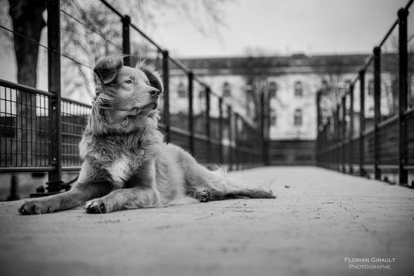 Florian Gibault est soigneur au refuge ASA de Chatellerault, mais aussi photographe animalier