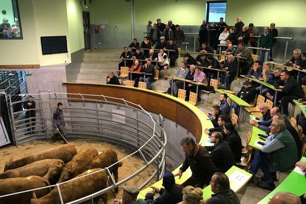 Le 30 septembre, le marché du cadran à Mauriac (Cantal) a renforcé les inquiétudes des éleveurs face à la baisse des cours de la viande bovine.