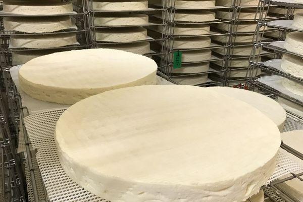 Le Brie de Meaux dans la fromagerie de Biencourt-sur-Orge pèse environ 3,2 kg.