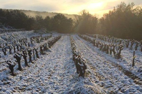 Le gel et la neige dans les vignes