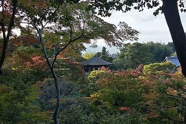 Le chemin des philosophes, entre quelques temples de Kyoto.
