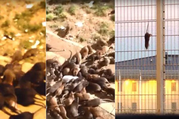Des images tournées à Sequedin par un détenu.