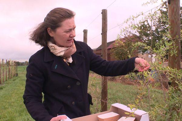 Amatrice de baies de goji, Valérie Leroy s'est lancée dans cette production en 2018.