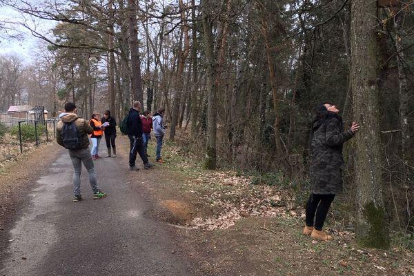 Une battue a été organisée afin de retrouver le panda roux qui a disparu du Parc animalier d'Auvergne situé à Ardes-sur-Couze.