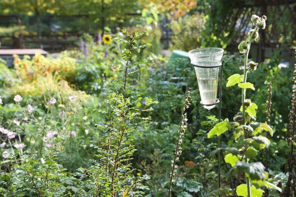Le pluviomètre, l'allié utile du jardinier
