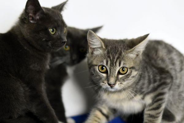 Le refuge SPA de Poitiers va rouvrir ce 1er juillet et à nouveau proposer des chats et chiens à adopter.