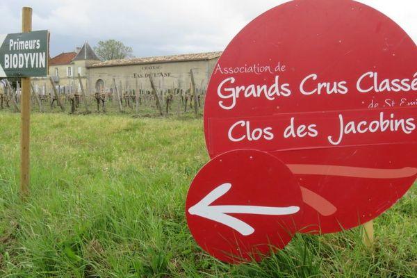 Les panneaux généralement positionnés en mars-avril pour la semaine des primeurs, ici à Saint-Emilion © Jean-Pierre Stahl