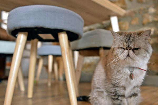 """""""Le Gentle Cat"""" compte habituellement 30% de clientèle étrangère."""