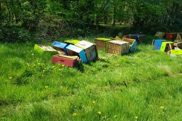 Le deuxième rucher vandalisé de Mathieu Noirot.