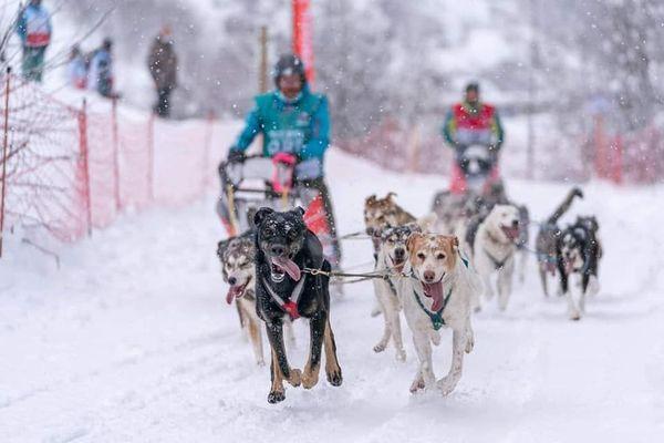 Au terme de douze jours de course, Aurélien Froidure et ses huit chiens ont décroché la septième position au classement général.