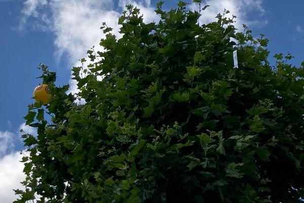 Des ballons et des rubans dans certains arbres du Port du Rhin