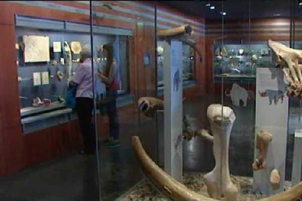 Le musée présente de nombreuses collections.