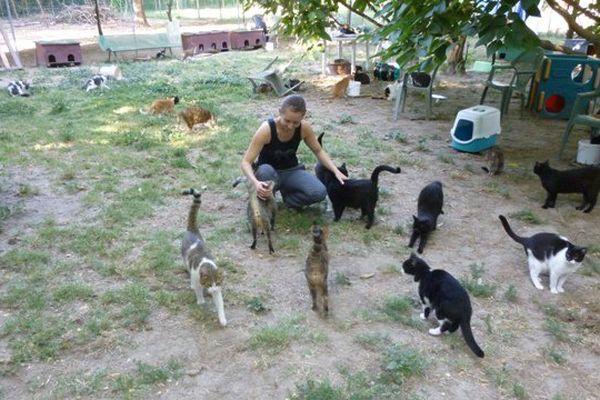 La SPA Vauclusienne de l'Ilse-sur-la-Sorgue accueille 800 chats et chiens.