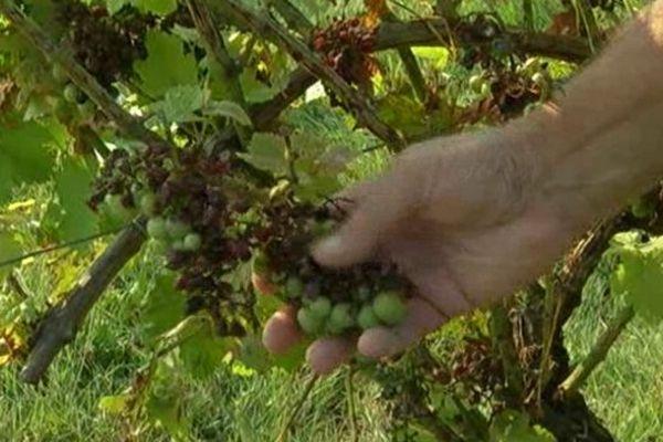 A Guillac, en Gironde, les 800 hectares du vignoble ont été touchés.