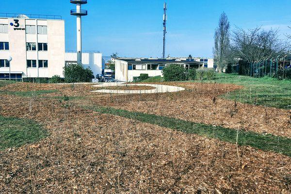 Les plantations des arbres er arbustes sont terminées