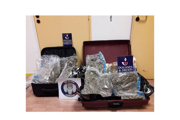Les sachets d'herbe de cannabis se trouvaient dans deux valises