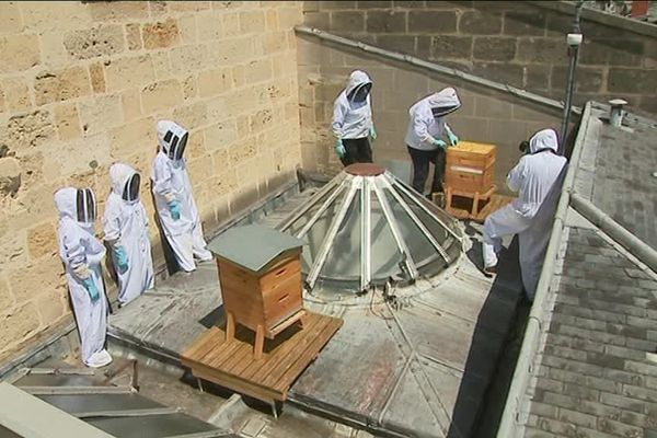 Deux ruches sont installées sur le toit de l'Opéra.