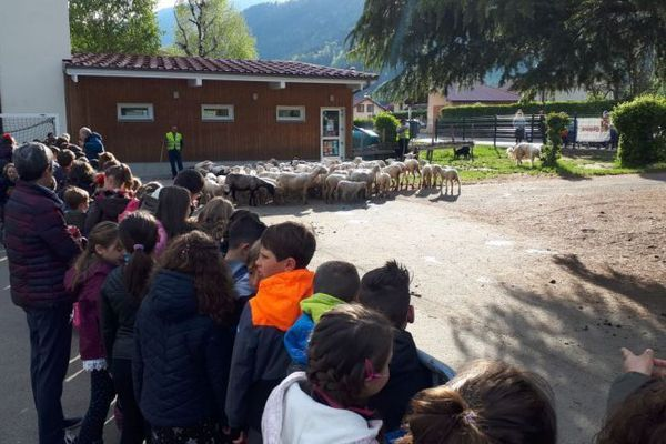 Jour de l'inscription officielle des moutons à l'école de Crêts en Belledonne, en Isère