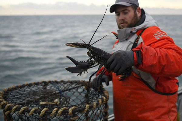 Beau spécimen pour Julien Robin à la pêche au homard en baie de Paimpol (22)