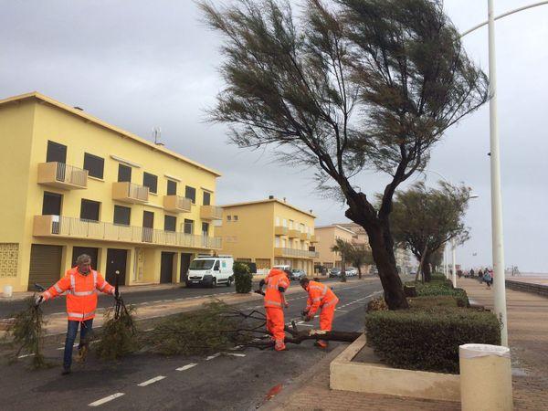 15 arbres arrachés à Valras-Plage, dans l'Hérault - 13 octobre 2016