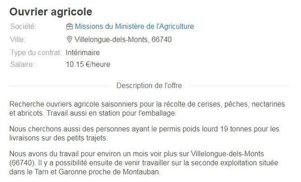 Les annonces, fleurissent, actuellement sur les sites pour les saisonniers en Occitanie, ici dans les P.O et le Tarn-et-Garonne.
