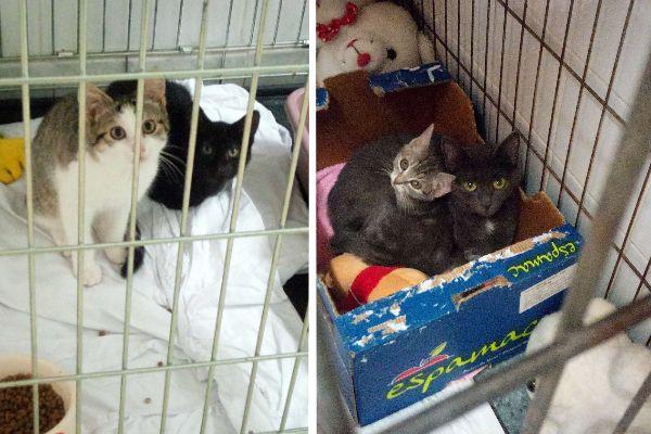 40% des chats trouvés par la fourrière municipale doivent être euthanasiés, sans raison médicale.