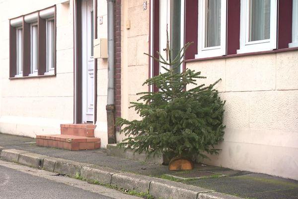 Chaque année, les sapins de Noël sont récoltés et recyclés