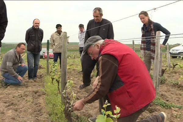 Formation aux métiers de la vigne  - Reuilly (Indre) - Avril 2019