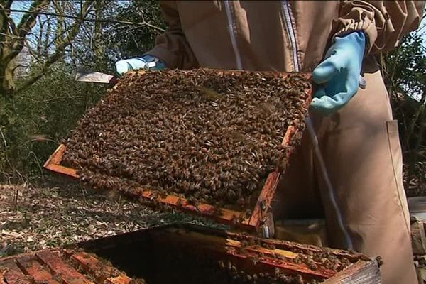 Les apiculteurs sont rassurés au sortir de l'hiver