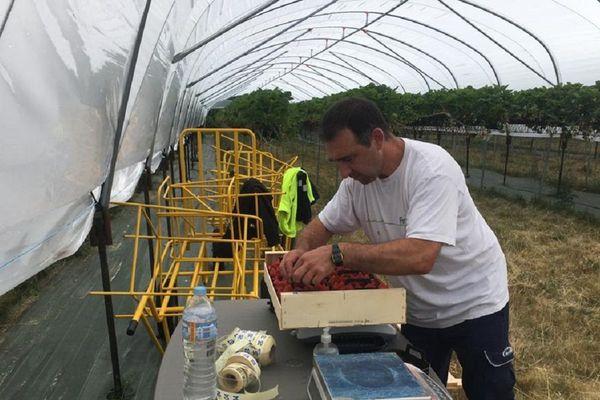 En Haute-Loire, la saison des fruits rouges démarre bien pour les producteurs, malgré les inquiétudes liées au coronavirus COVID 19.