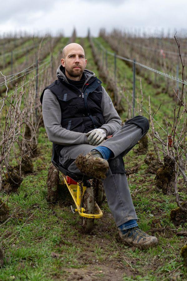 La conversion à l'agriculture biologique nécessite plus de travail dans les vignes. En février, c'est le moment de la taille.