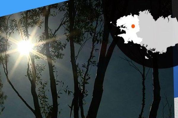 Dans les bois et les forêts de Bretagne, on recense plus de 70 arbres feuillus et résineux