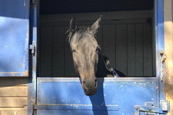 À l'abri dans son box, ce cheval n'ira pas se contaminer dans d'autres centres équestres.