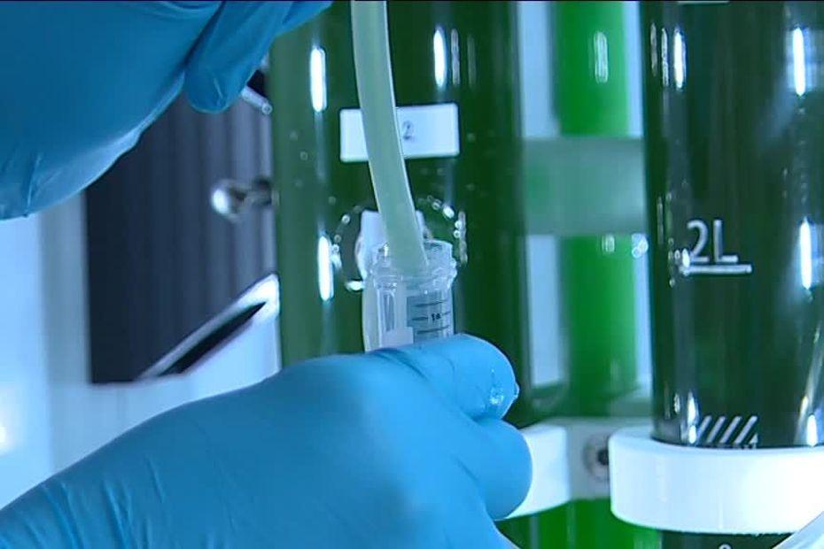 Un carburant à base de micro-algues mis au point par une start-up de Montpellier