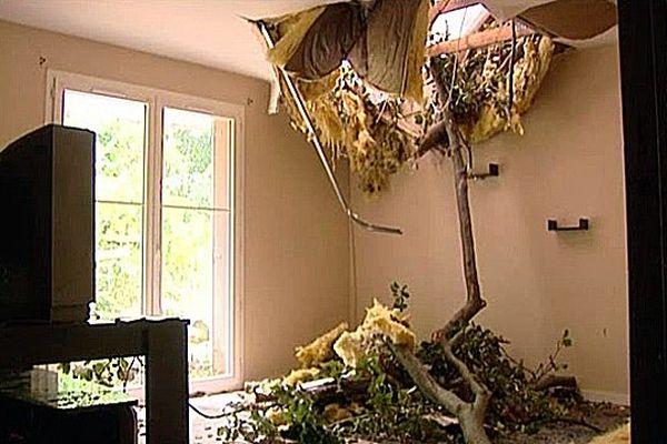 Certaines maisons sont inhabitables à cause de la chute des arbres.