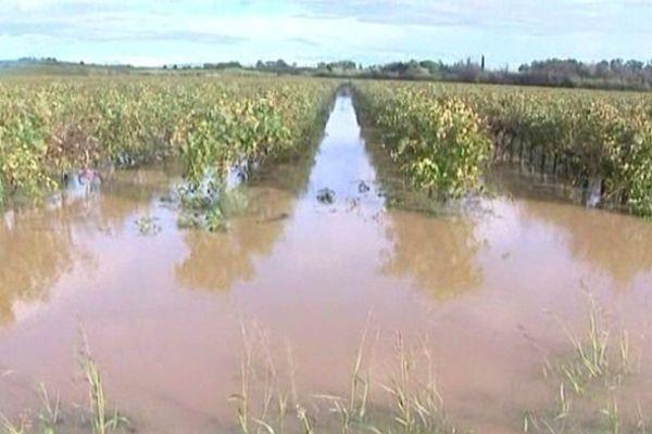 Vignes inondées à Villeneuve-de-la-Raho (Pyrénées-Orientales)