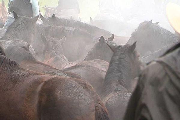 Argelès-sur-Mer (Pyrénées-Orientales) - la transhumance des chevaux de Mérens - avril 2018.