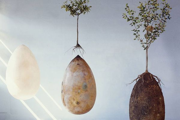 La capsule funéraire est 100% biodégradable.