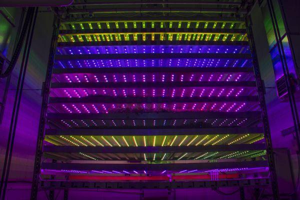 Des LED sont utilisées pour la croissance des plantes.