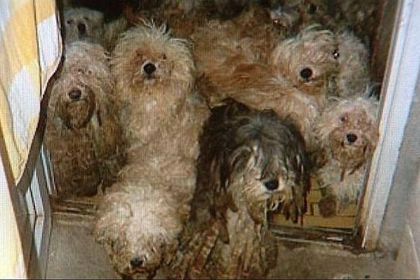 36 chiens qui vivaient dans des conditions épouvantables ont été enlevés à leur maître et confiés à la SPA de la Nièvre et du Cher