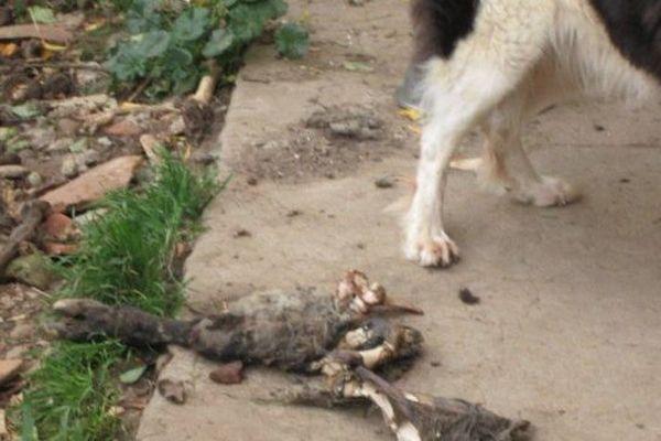 """Les """"restes"""" d'un animal aux pattes d'un chien"""