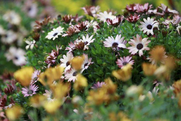 Chateaubernard Apprendre A Cultiver Et Jardiner Autrement
