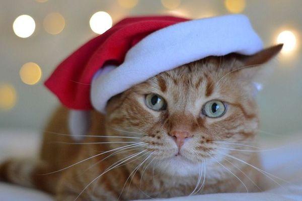 Quel temps fera-t-il pour le réveillon de Noël ?