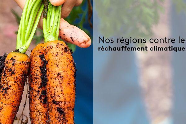 Depuis 3 ans, la nature a investi la cour du collège du Thillot dans les Vosges.  Une idée du principal pour éduquer les collégiens à la protection de l'environnement.