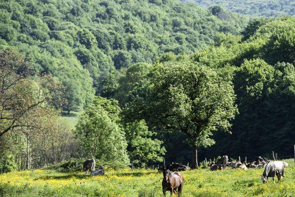 Une vue du futur parc national de Champagne et Bourgogne près de Châtillon-sur-Seine, en Côte-d'Or.